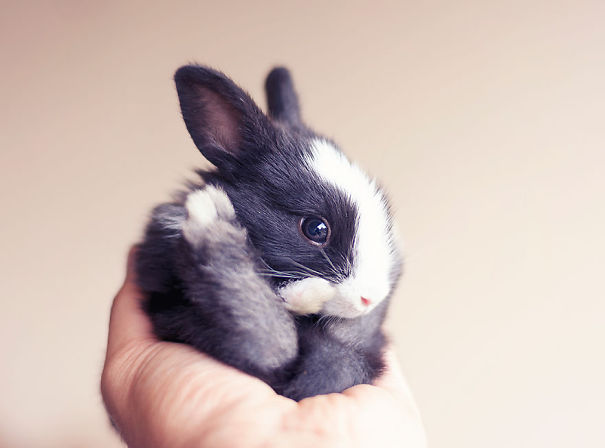 XX-Cutest-Bunnies__605