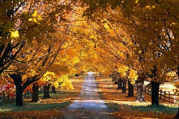 autumn_road2-600x400