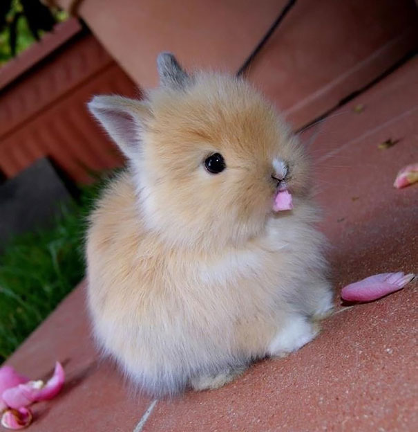 cute-bunnies-102__605