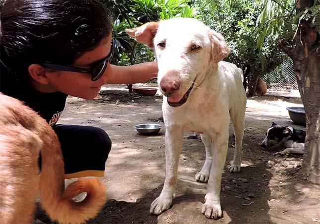 megmentett-kutya-4