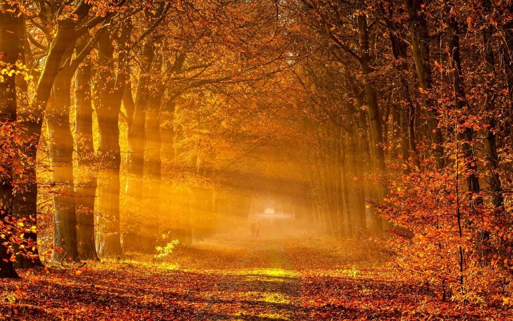 Autumn-Wallpaper-autumn-35867755-1280-800