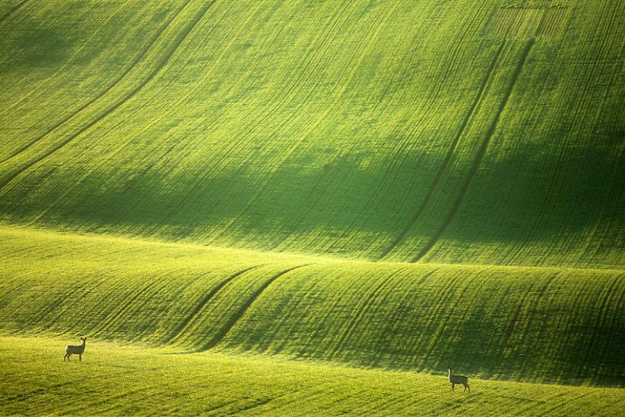 Moravian-fields-1__880