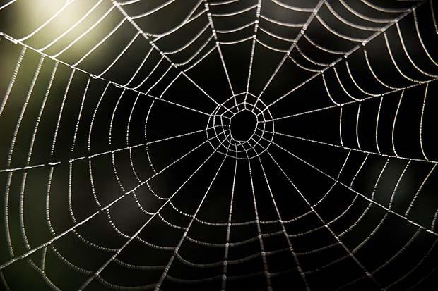 Spider-web-620x413