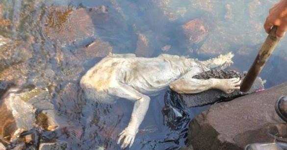 alien-mysterious-creature-paraguay-585x306