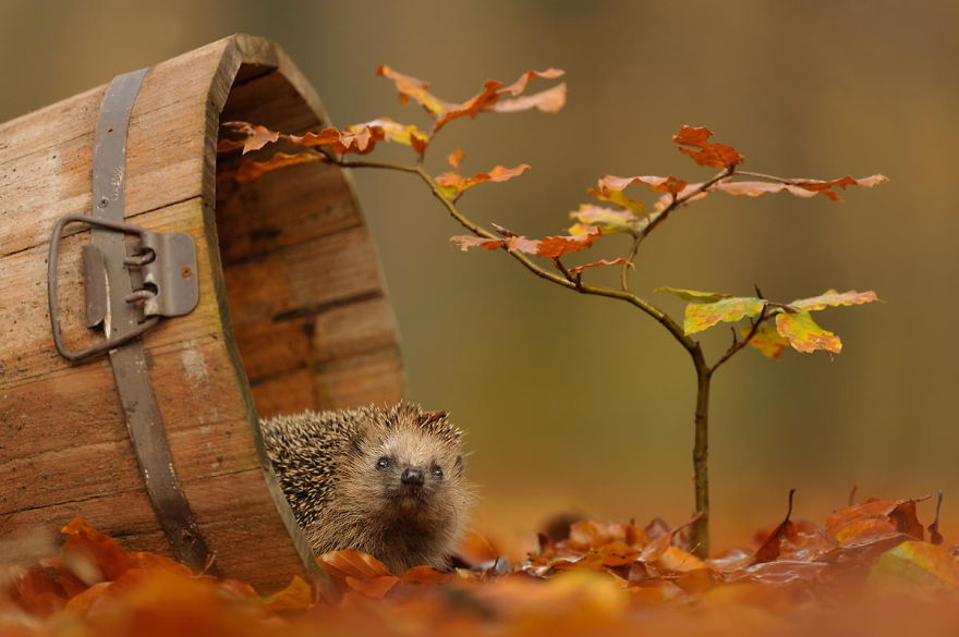 autumn-animals-1__880