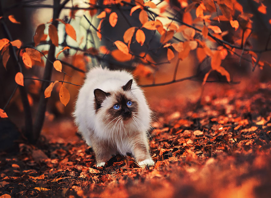 autumn-animals-20__880