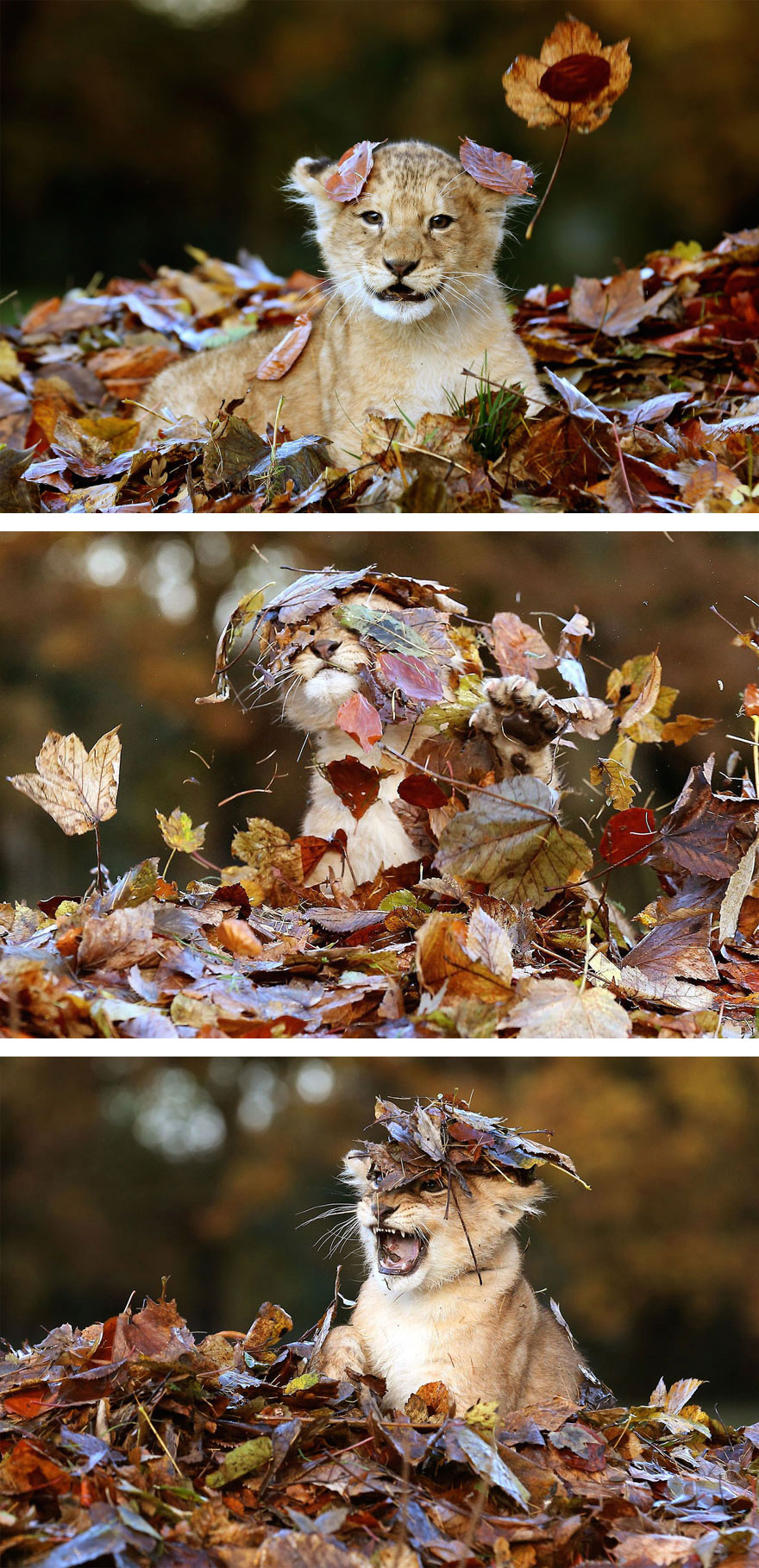 autumn-animals-2__880 (1)