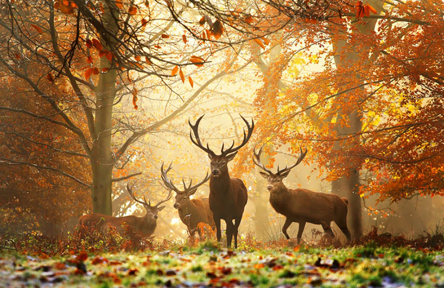 autumn-animals-5__880