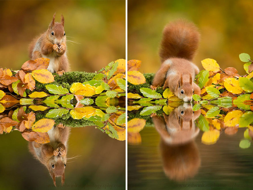 autumn-animals-6__880