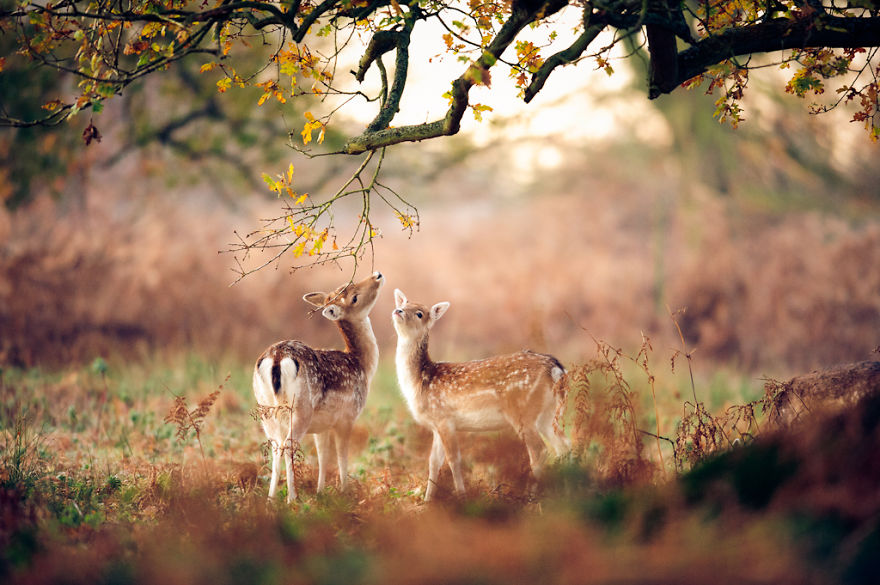 autumn-animals-7__880