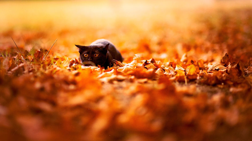 autumn-animals-8__880