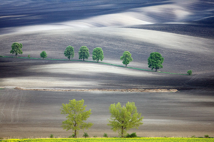 drzewka-got-900__880