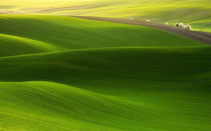 faldki-crop-zielenblur-900__880