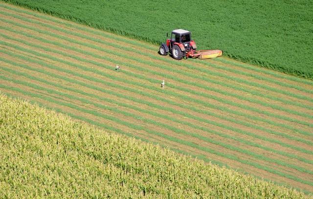 Mezõgazdaság - Idénymunka a földeken