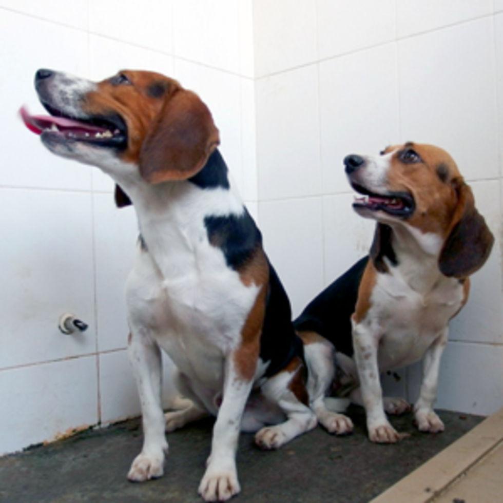 genmodositott-kutyak