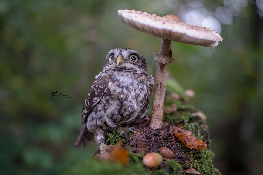 owl-and-mushrooms-tanja-brandt-111