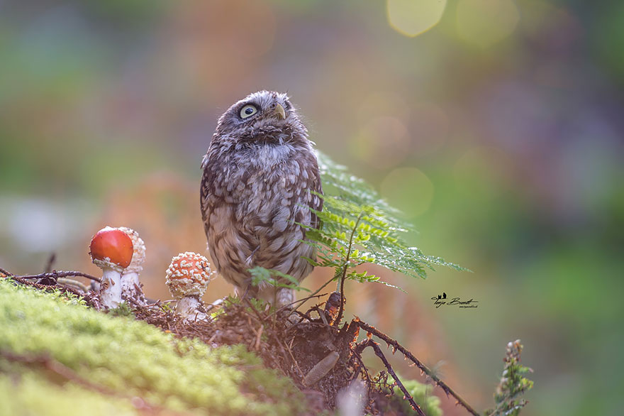 owl-and-mushrooms-tanja-brandt-3__880