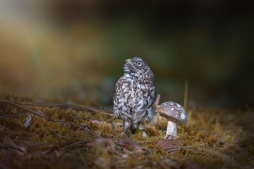 owl-and-mushrooms-tanja-brandt-4__880