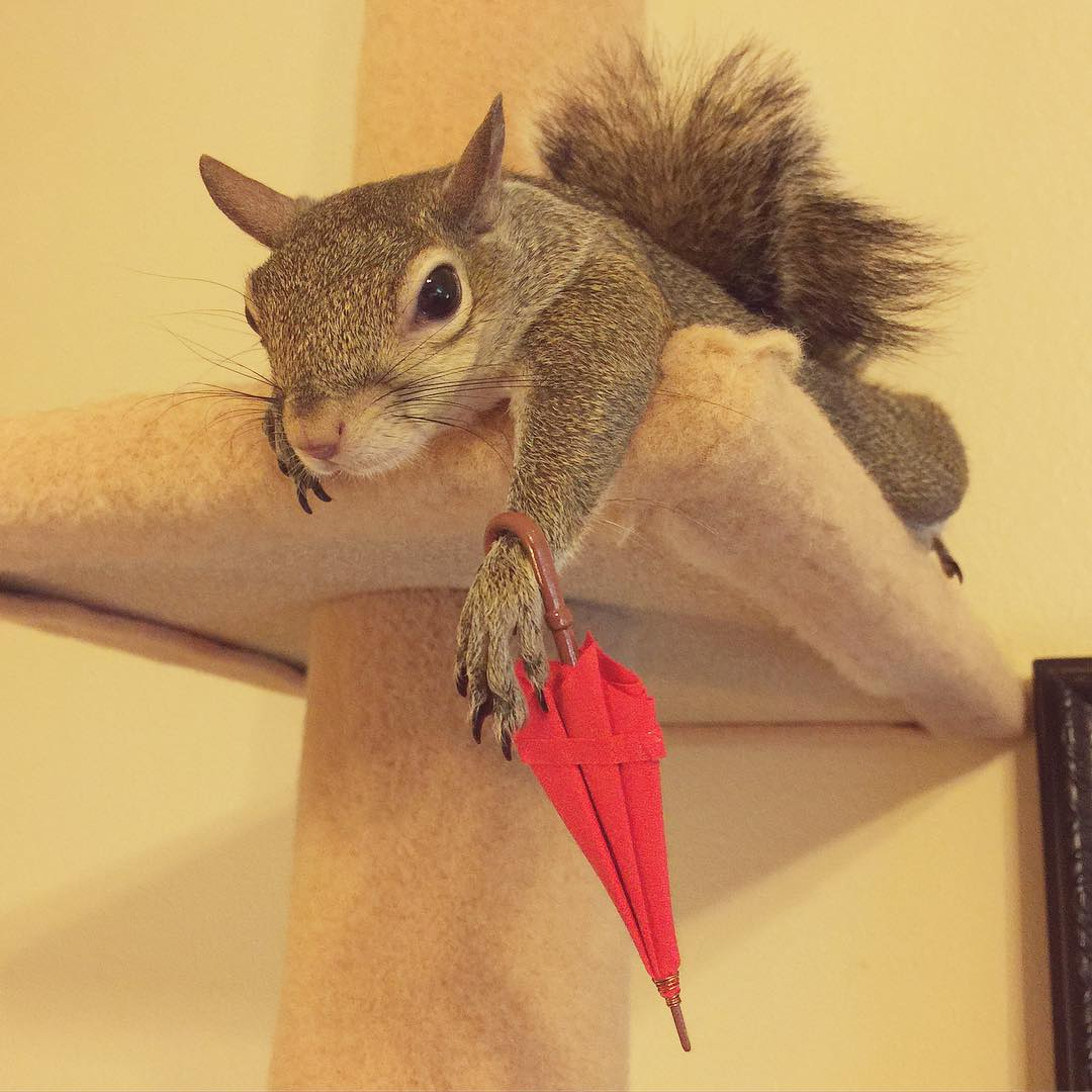 photogenic-rescue-squirrel-jill-11