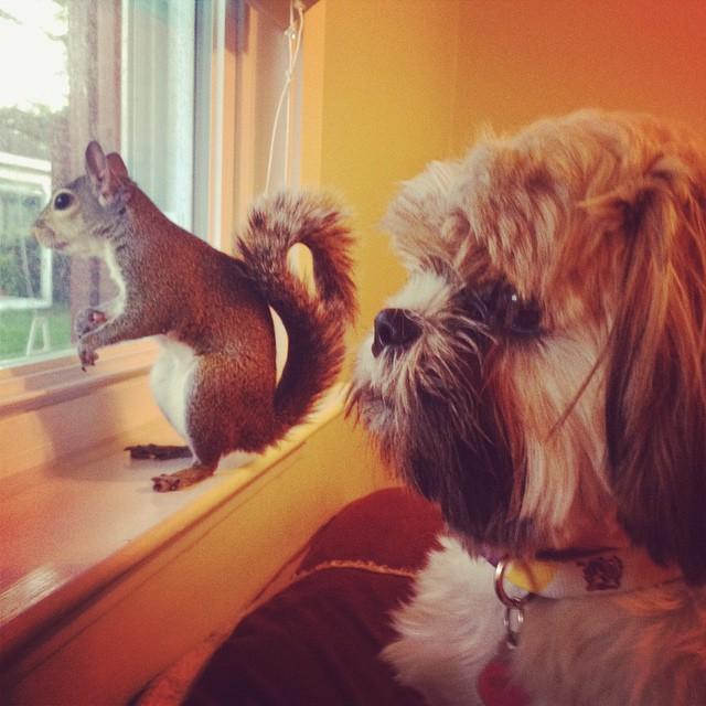photogenic-rescue-squirrel-jill-18
