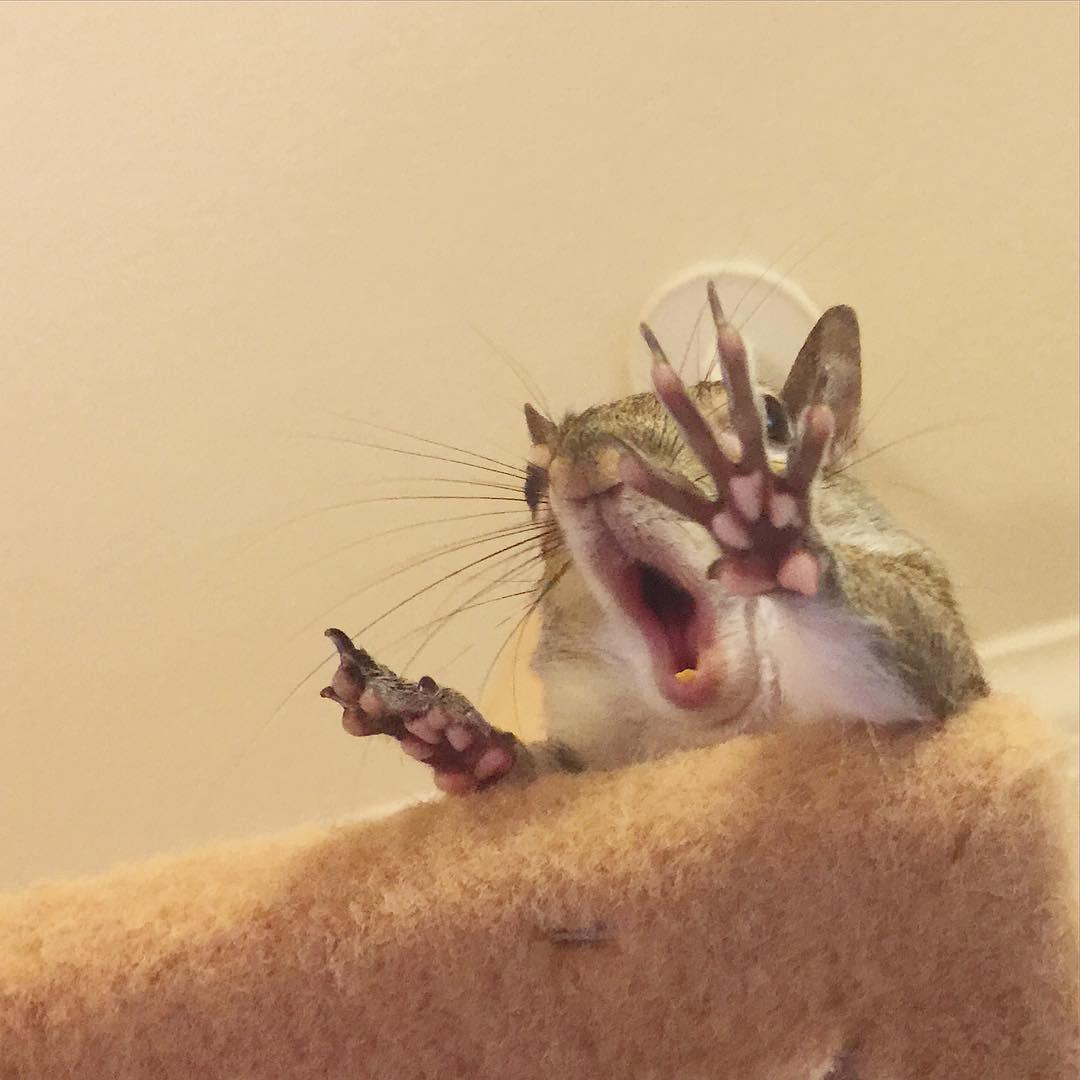 photogenic-rescue-squirrel-jill-46