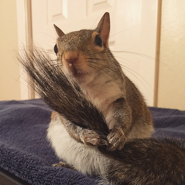photogenic-rescue-squirrel-jill-47