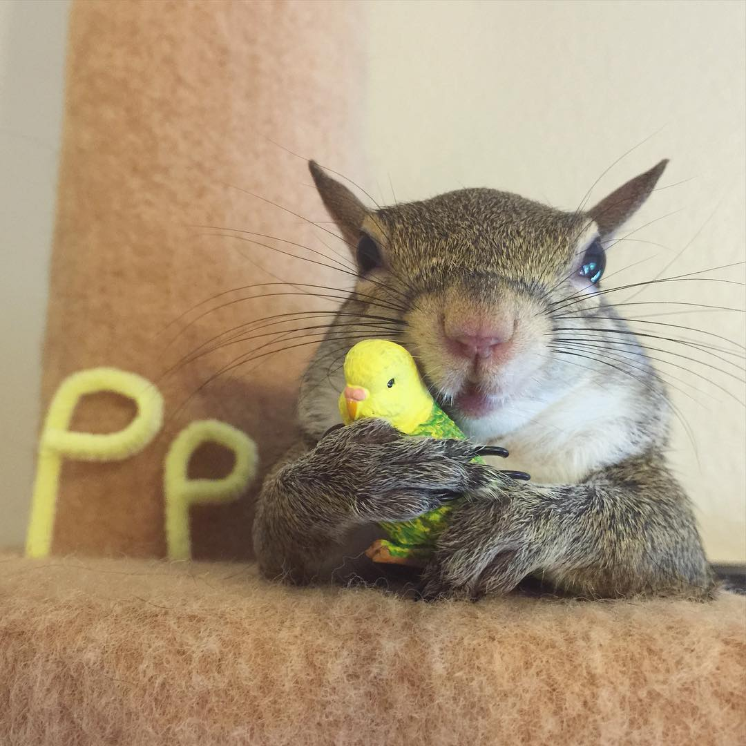 photogenic-rescue-squirrel-jill-52