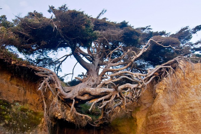20151104tree-of-life-tree-roots