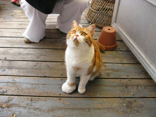 cat-bee-stings-103__605