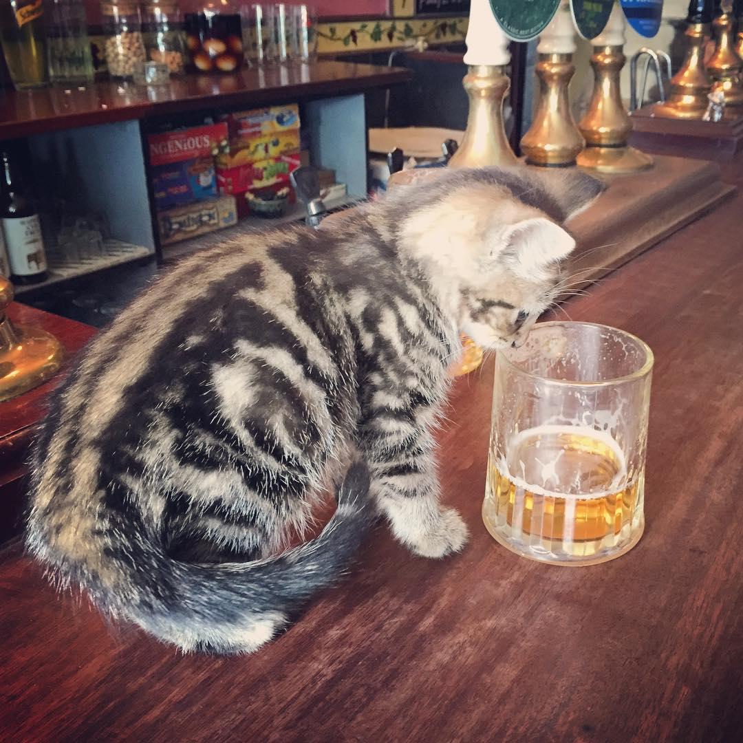 cat-pub-bar-bag-of-nails-bristol-uk-12