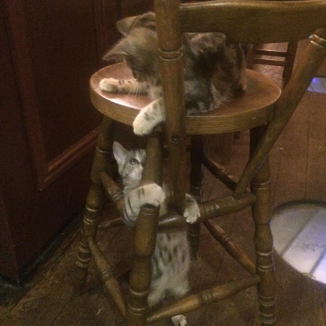 cat-pub-bar-bag-of-nails-bristol-uk-15