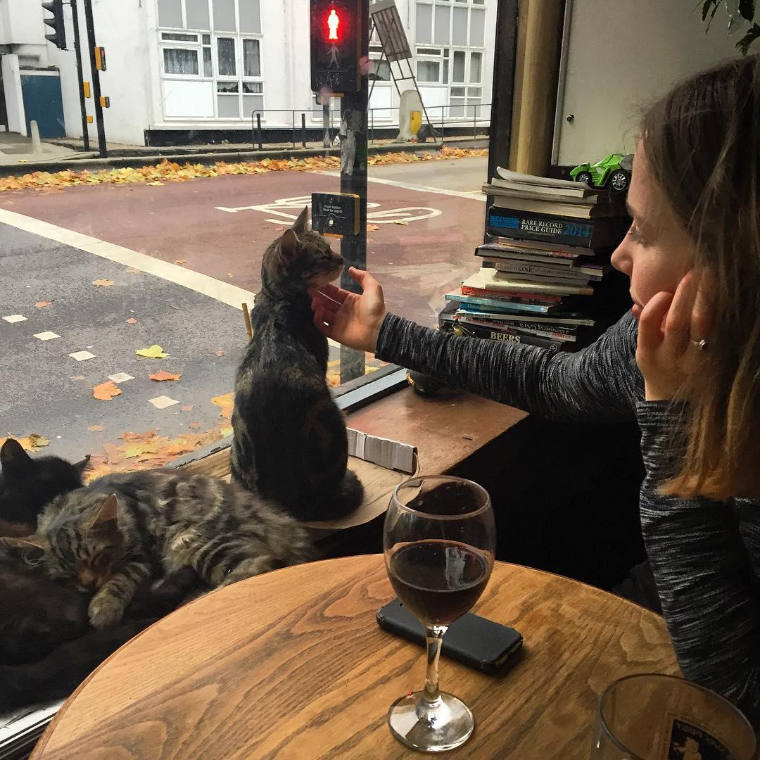 cat-pub-bar-bag-of-nails-bristol-uk-21