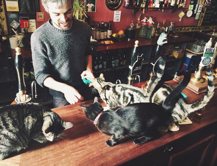 cat-pub-bar-bag-of-nails-bristol-uk-29