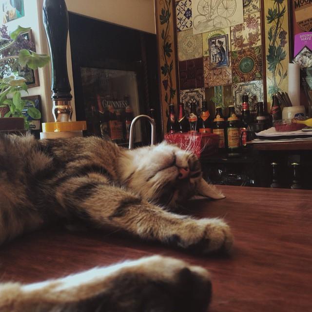 cat-pub-bar-bag-of-nails-bristol-uk-5