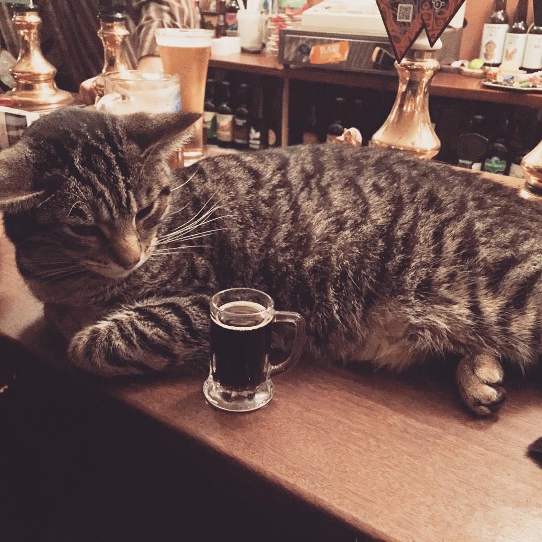 cat-pub-bar-bag-of-nails-bristol-uk-9
