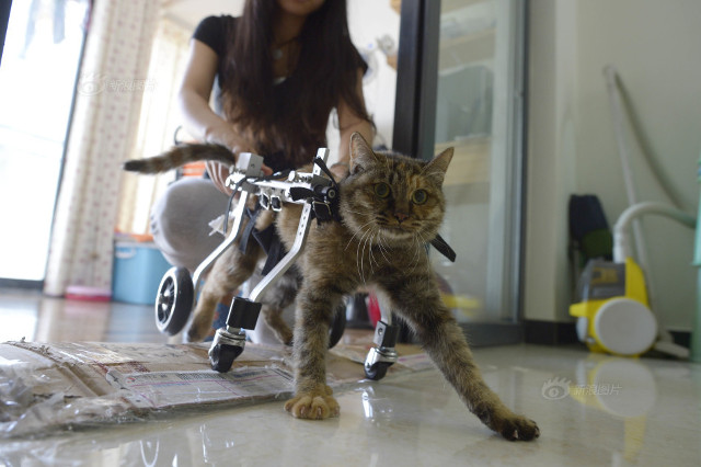 cat_wheelchair3