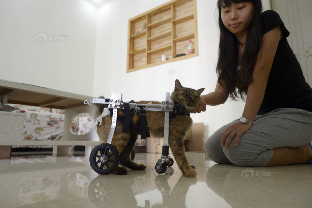 cat_wheelchair4