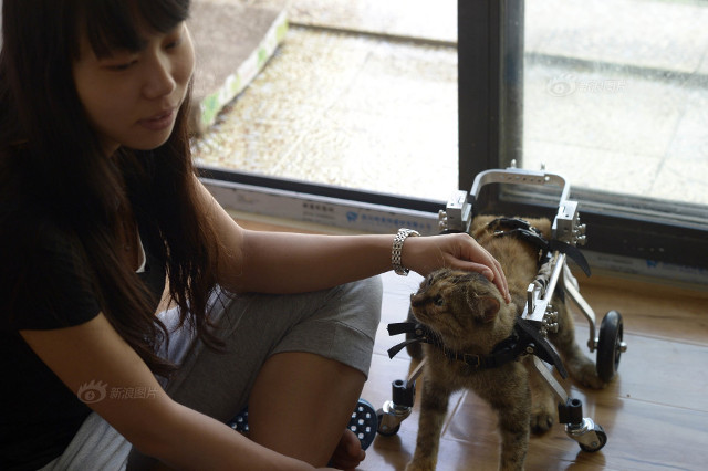 cat_wheelchair5