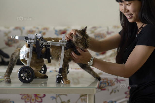 cat_wheelchair8