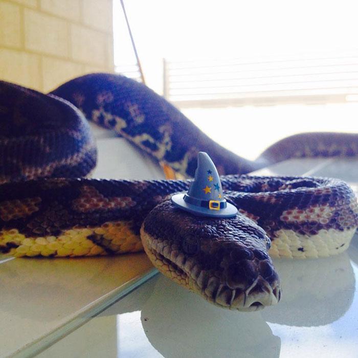 cute-snakes-wear-hats-100__700