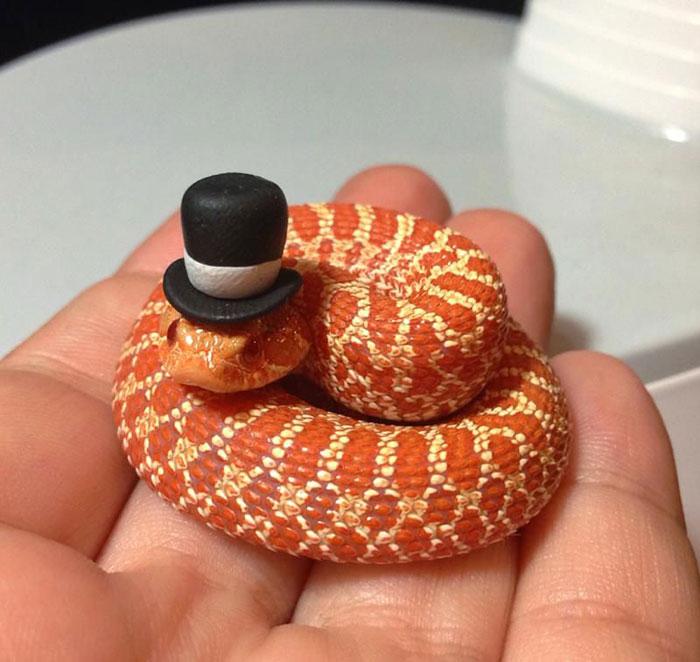 cute-snakes-wear-hats-106__700