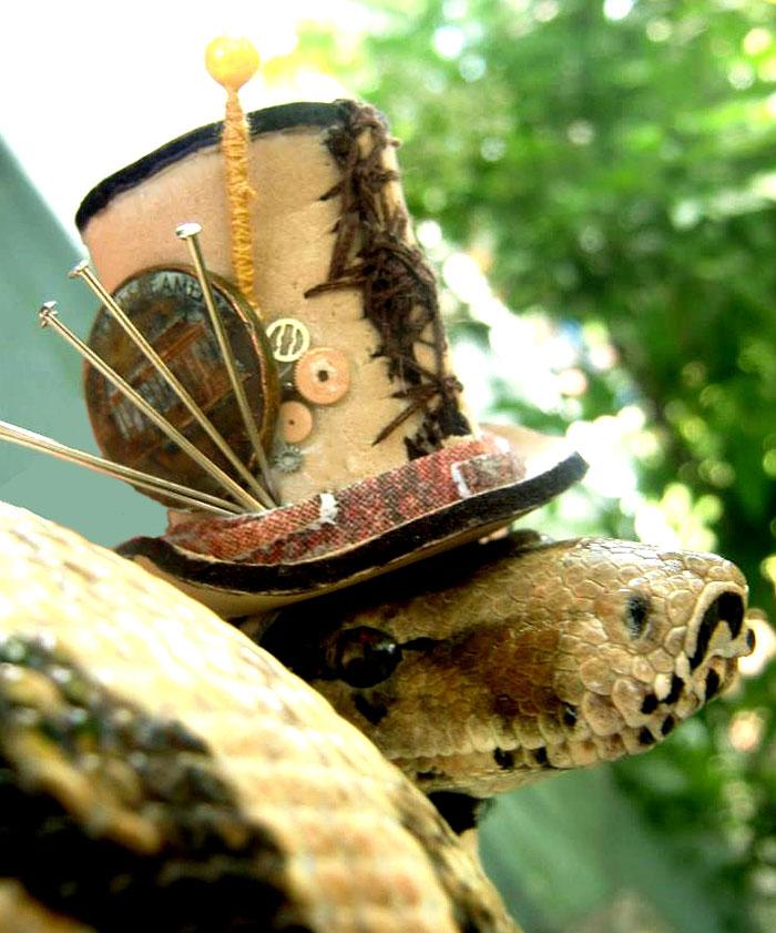 cute-snakes-wear-hats-107__700