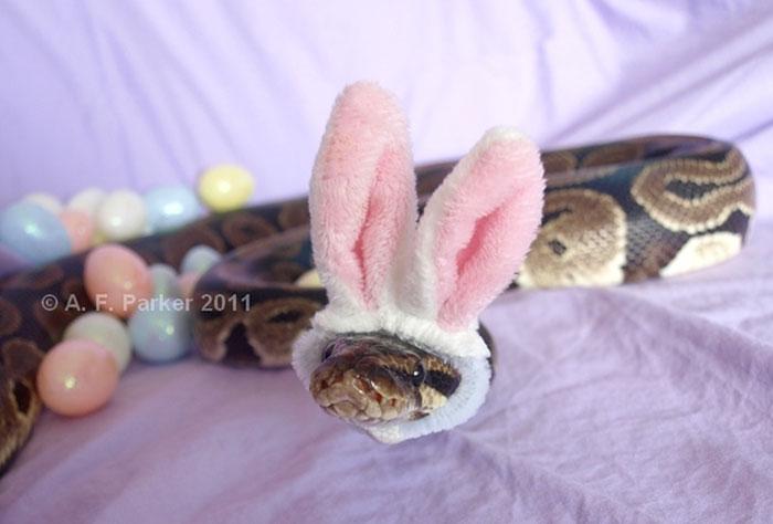 cute-snakes-wear-hats-110__700