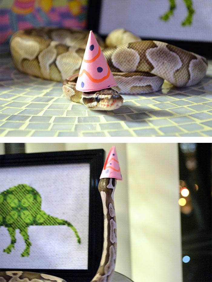 cute-snakes-wear-hats-134__700