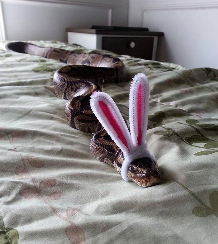 cute-snakes-wear-hats-801__700