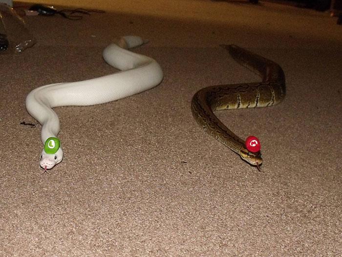 cute-snakes-wear-hats-84__700