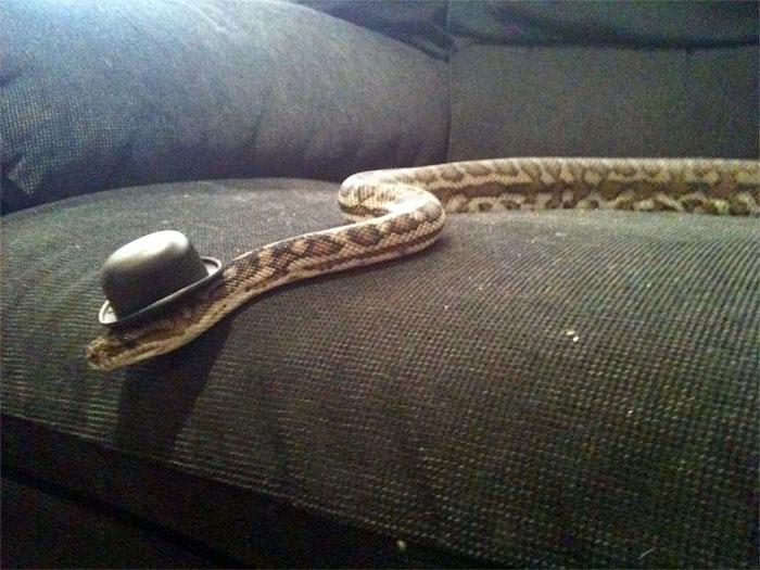cute-snakes-wear-hats-94__700