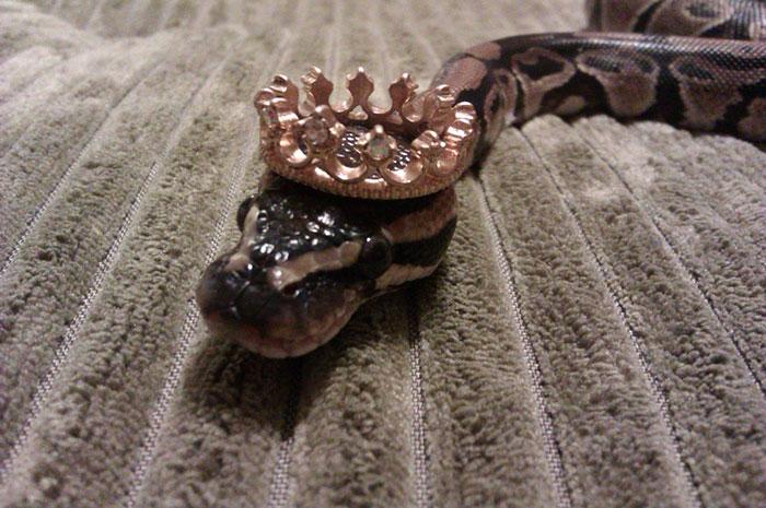 cute-snakes-wear-hats-99__700