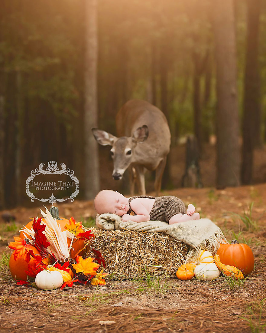deer-photobombs-baby-photoshoot-maggie-connor-megan-rion-1 (1)