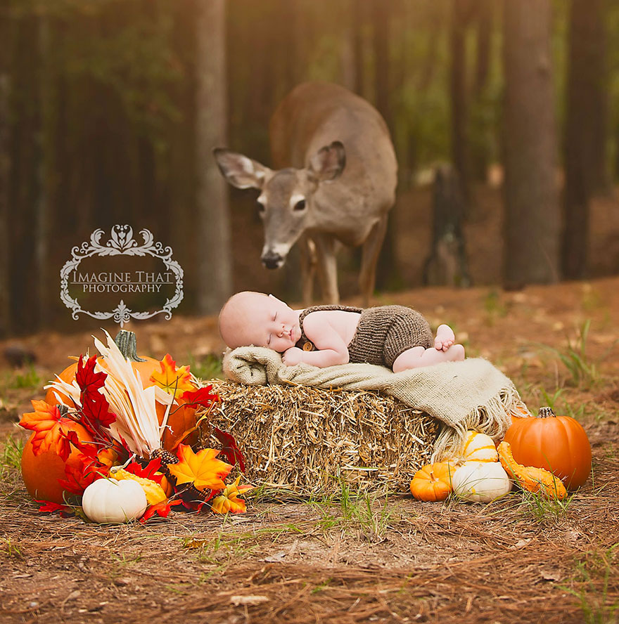 deer-photobombs-baby-photoshoot-maggie-connor-megan-rion-9